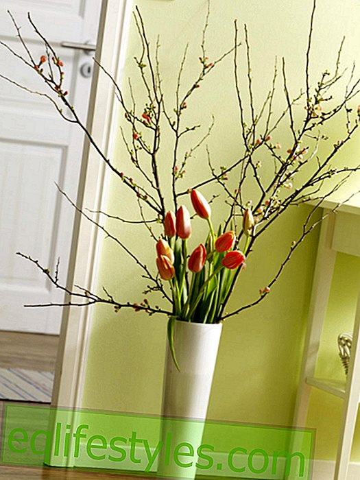 live - Spring bouquet with quince branches and tulips