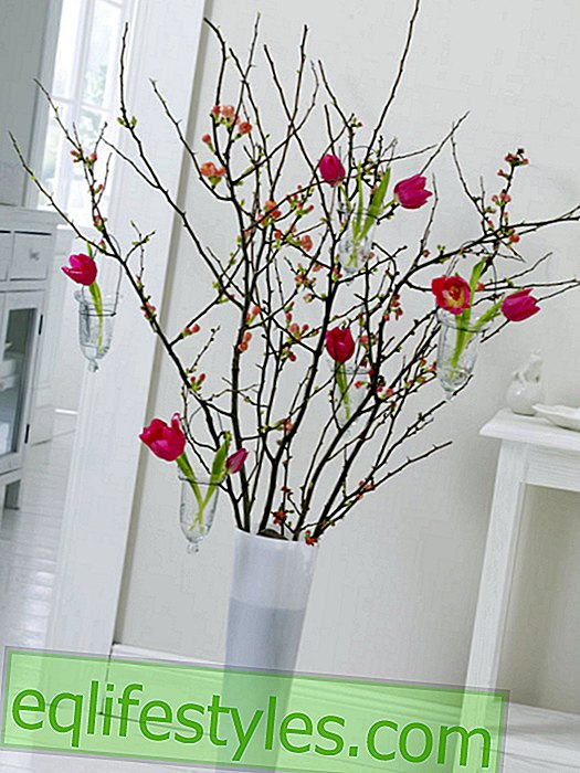 live - Quince twigs with small glass vases and tulips