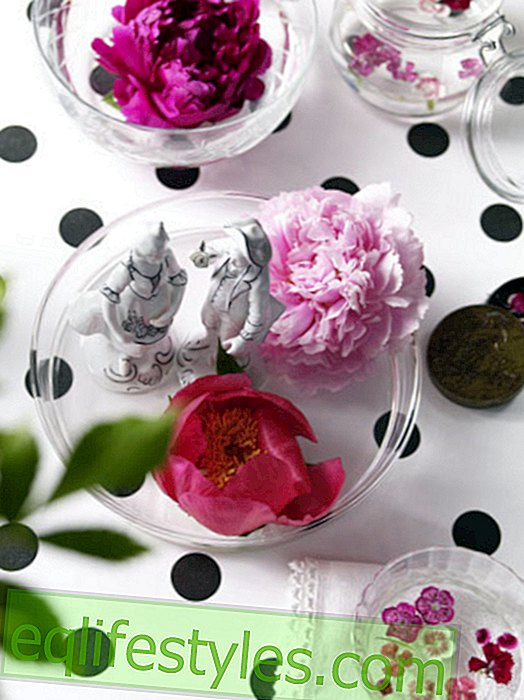 live - Peonies deco: So beautiful is the peony