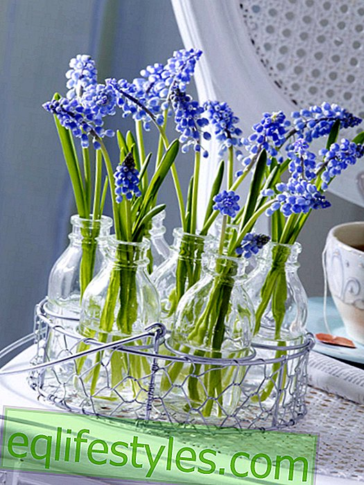 Wire frame with pearl hyacinths