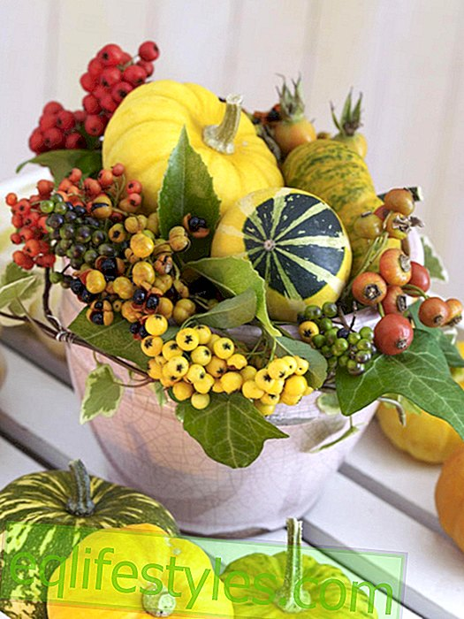 live - Mini gourds in the planter with berries