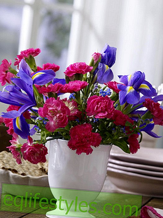 live - Bouquet of small-flowered spray carnations in pink