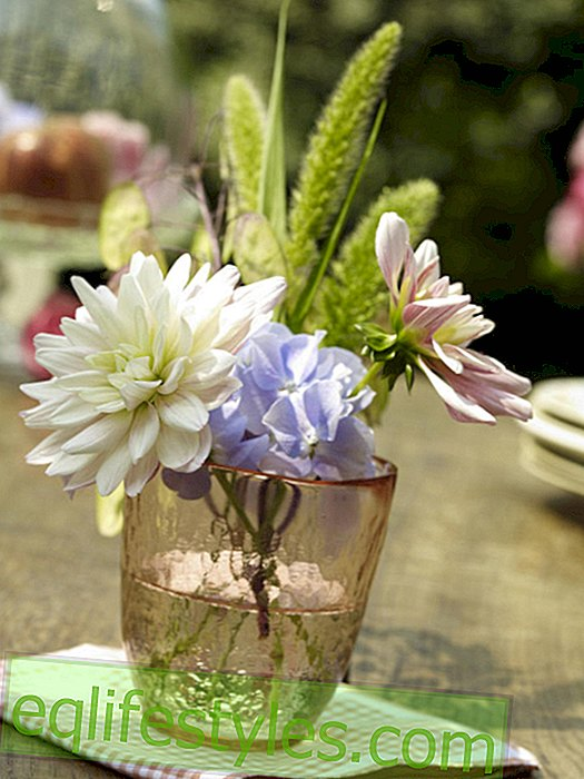 Dahlias: Small arrangement in the glass