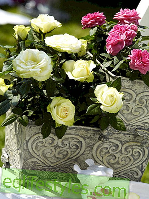 live: Stacked flower boxes with roses