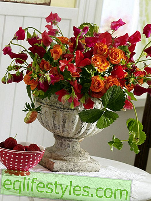 Thick peaces with roses and strawberries