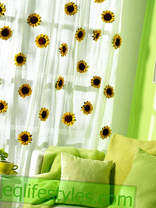 live - Sunflower curtain