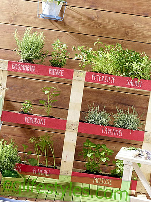 live - This herb garden also fits on the smallest balcony