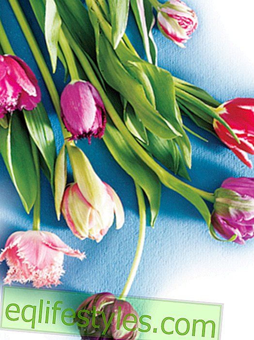 Tulipanes: ideas de decoración en sus variantes más bellas