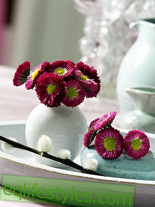 Small bouquet from Bellis