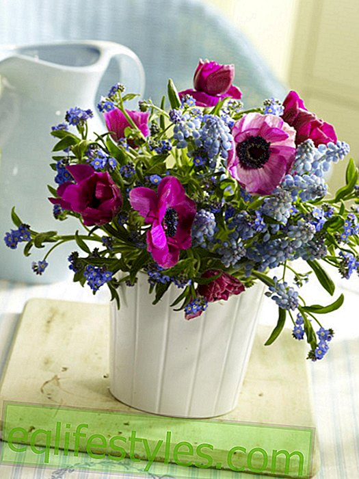 Small spring bouquet of anemones, pearl hyacinths and forget-me-nots