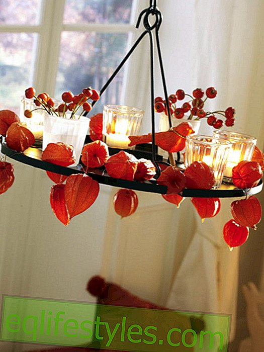 Hanging wreath with physalis