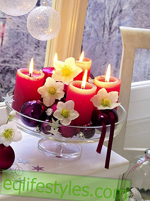 Pink pillar candles with Christmas roses