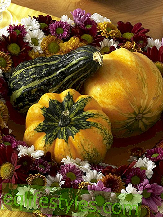 Flower wreath with pumpkins
