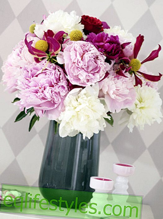 Magical flowers: peonies 4 times different